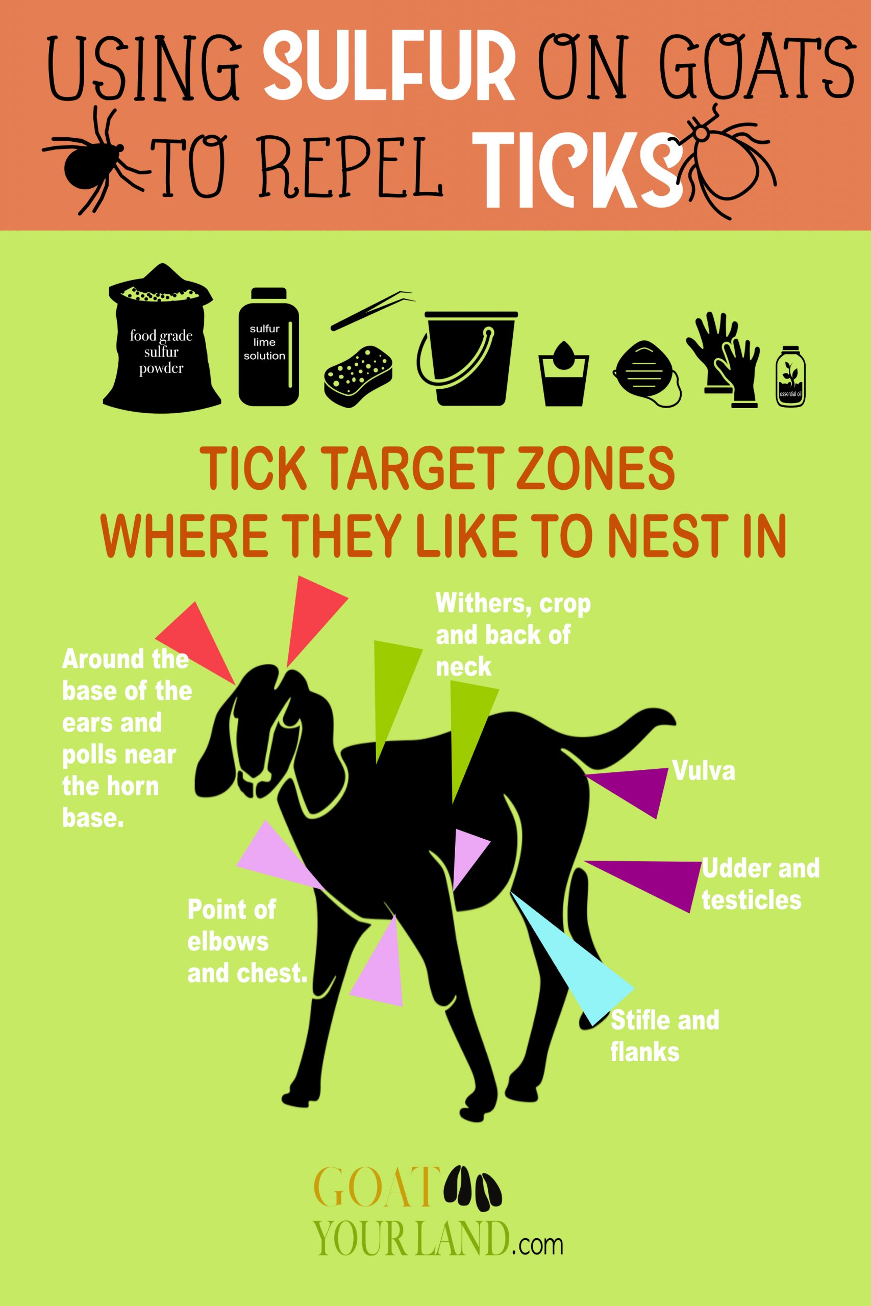 where ticks nest on goats